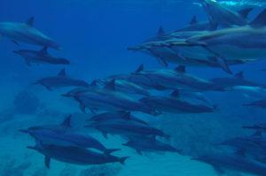 iruka-dolphinpod